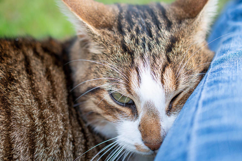 moment câlin du chat