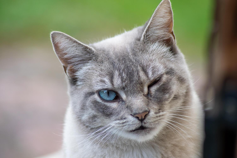 chat clin d'oeil