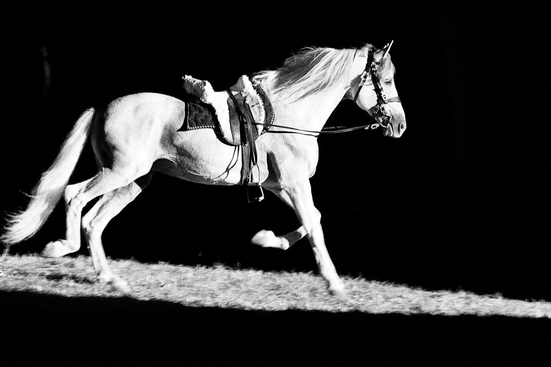 Cheval blanc au galop