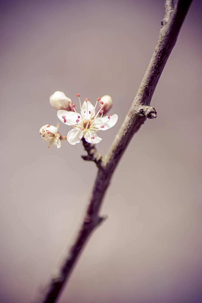 groupe de fleur sur sa branche
