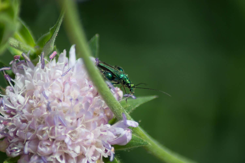 insecte et macro