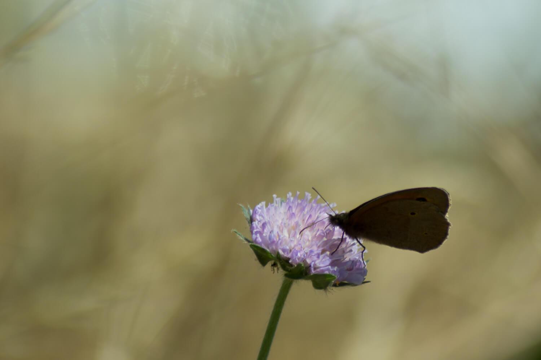 l'heure du repas pour le papillon